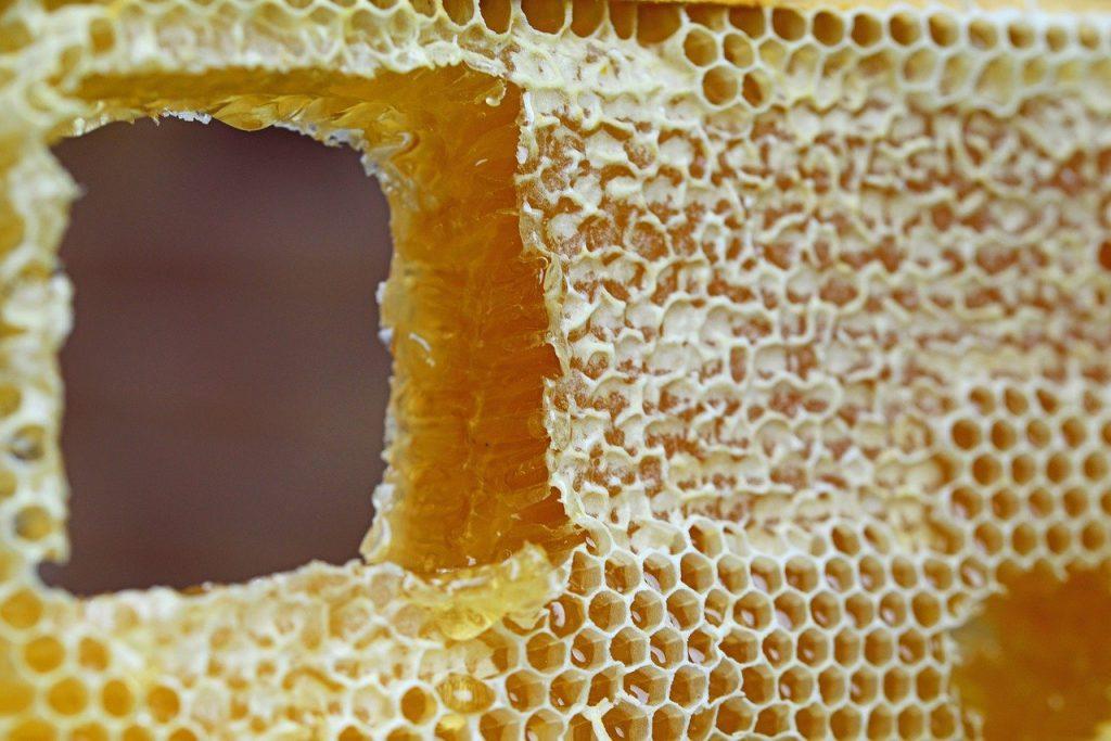 honeycomb, comb, honey